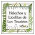 Helechos y Licofitas de Los Tecajetes, Veracruz, México icon