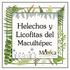 Helechos y Licofitas del Macuiltépetl, Veracruz, México icon