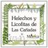 Helechos y Licofitas de Las Cañadas, Veracruz, México icon