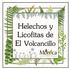 Helechos y Licofitas de El Volcancillo, Veracruz, México icon