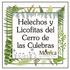 Helechos y Licofitas del Cerro de las Culebras, Veracruz, México icon