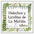 Helechos y Licofitas de La Michilía, Durango, México icon