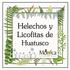 Helechos y Licofitas de Huatusco, Veracruz, México icon