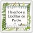 Helechos y Licofitas de Perote, Veracruz, México icon