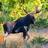 Wildlife sightings of Maine icon