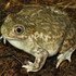 Arkansas River Valley Frogs icon