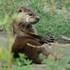 North Coast Otters icon