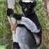 UF in Madagascar icon