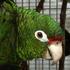 Biodiversidad de Puerto Rico / Biodiversity of PR icon