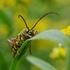 Beetles of Ontario icon
