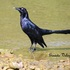 Aves del sur del Istmo de Tehuantepec, Oaxaca. icon