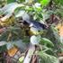 Biodiversidad de la cuenca del Río Fucha icon