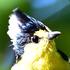 Taiwan Birds icon