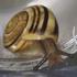Snails and Slugs in Minnesota icon