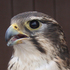 Morley Nelson Snake River Birds of Prey NCA Biodiversity icon