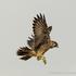 Kalamazoo bird collisions icon