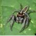 Arachnids of Alabama icon