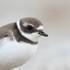 Birds of Illinois icon