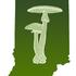 Indiana Fungi 2018 icon