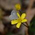 Flores Silvestres del Parque Chipinque icon