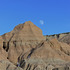 Plants of Badlands National Park icon