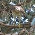 Iowa Bird icon