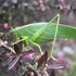 PLPT323 Vineyard invertebrates icon