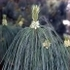 Flora e vegetazione del Monte Clemo icon