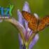 (Private and Obscured) Montpelier BioBlitz 2018 icon