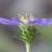 21596 icon thumb