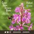 2018 Calvert Island Terrestrial BioBlitz icon