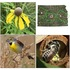 CRP Plants Birds and Insects icon