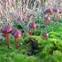 Mushrooms of Multnomah County Oregon icon