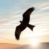 Birds of Serbia icon