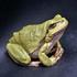 Amphibians of Serbia icon