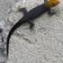 Anfibios y Reptiles de Antioquia icon