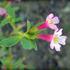 Herbarium Specimens: Sagehen Creek Basin icon