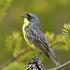 Southern Ontario Pine-Oak Savanna Initiative icon