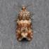 Moths of Alaska, the Yukon, and adjacent regions icon