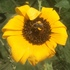 UT-OSU Southern Plains Pollinator Conservation Project icon