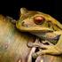 Anfibios y Reptiles del Suroccidente Colombiano icon