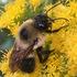 Dakota Bees icon