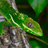 Floridensis: The Anoles icon