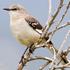Biodiversity of Nueces County, Texas icon