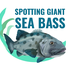Giant Sea Bass icon
