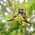 Bali Biodiversity icon