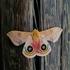 Mariposas Nocturnas del Parque Chipinque icon
