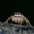 Invertebrate Zoology of UNSIL icon