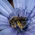 Fauna e flora do Parque Natural da Arrabida icon