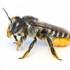 Utah Bee Atlas icon